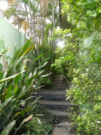 African Garden Lodge: Steps