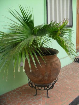 African Garden Lodge: The Pot