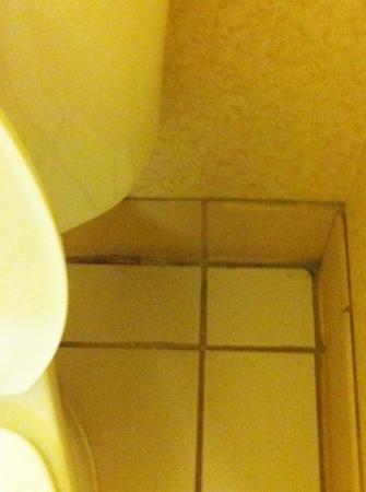 Fairfield Inn & Suites Rapid City: Yuck everywhere in our room