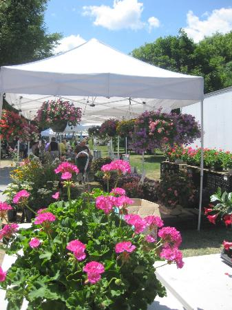 Saratoga Farmer's Market: More flowers