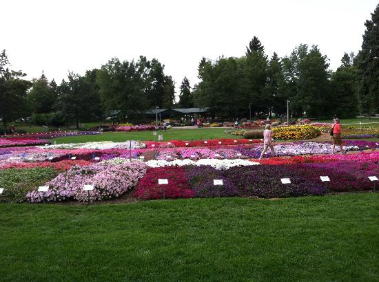 Fort Collins, CO: CSU's beautiful 'Trial' Gardens
