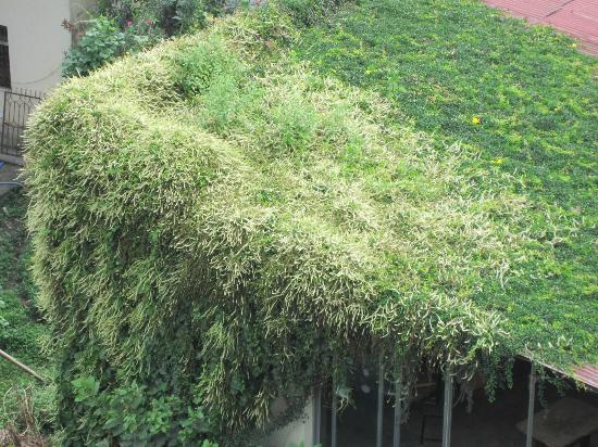 Hotel Buddha: garden