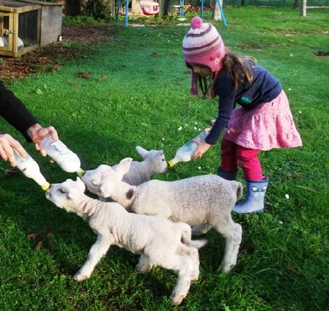 Kerikeri Holiday Cottages - Ragdoll & Black Cat: Feeding lambs