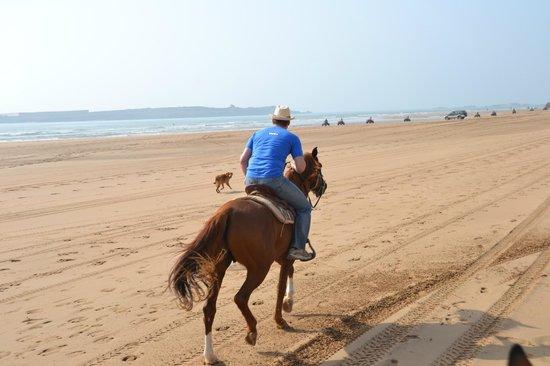 Villa Gonatouki: Promenade à cheval à la plage Essaouira
