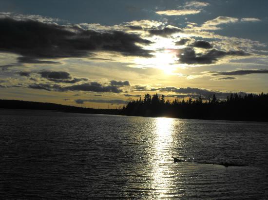 Honora Bay Riding Stables: Perch lake