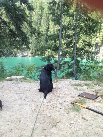 Kinbasket Lake Resort: Jemma Dog enjoyng the outdoors