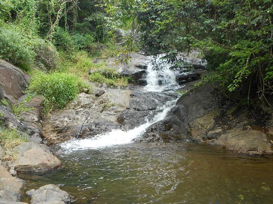 Coffea Aroma Resort - Wayanad: Water Fall