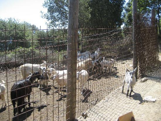 La Foce del Prato: Somewhere at the farm