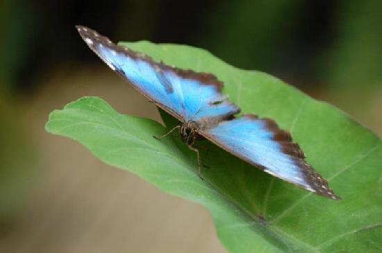 Le Tropique du Papillon: papillon2