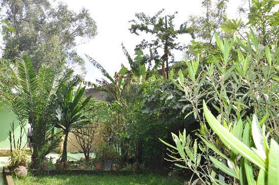 Abbaba's Villa: Green Garden