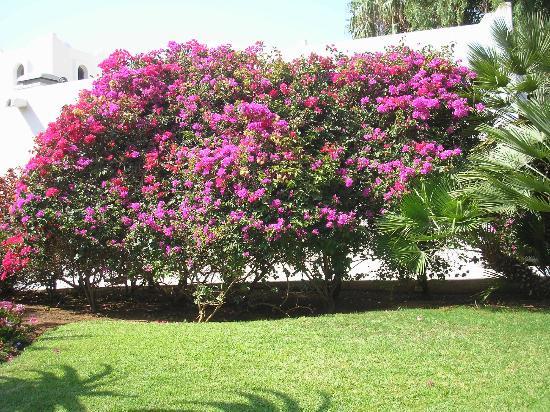 Club Med Agadir: Le Jardin