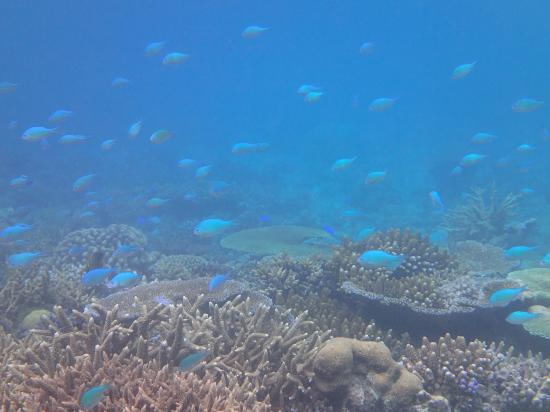 Taveuni Island Resort & Spa: Reef