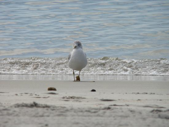 East Lyme, CT: Beach wildlife