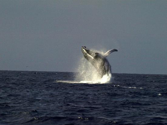 Le Grand Bleu: Saut de baleines