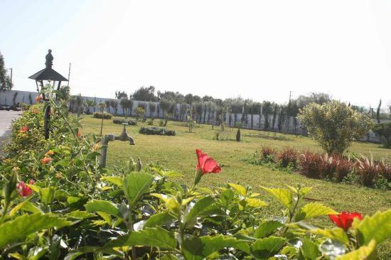 Hotel Riad Villa Damonte: jardin