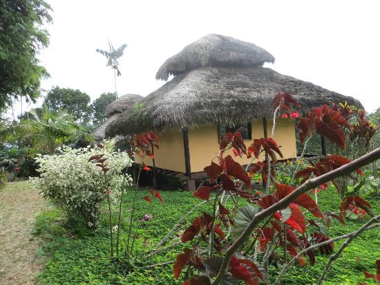 Arasha Tropical Rainforest Resort & Spa: A private cabin with bathroom and TV