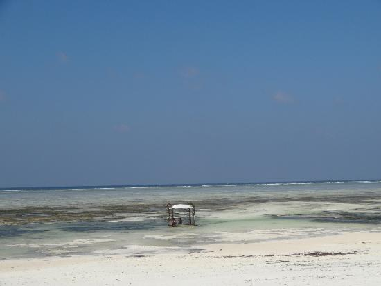 Breezes Beach Club & Spa, Zanzibar: Low tide