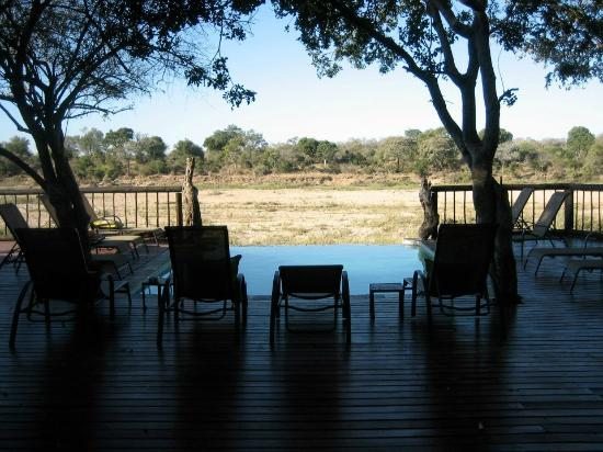 Umkumbe Safari Lodge: Pool area which overlooking the reserve. You can lay out and watch animals come by.