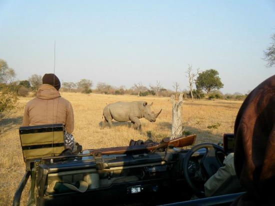 Umkumbe Safari Lodge: Very close to the rhinos on the game drive