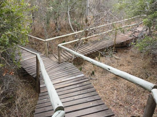 Panzi Bush Camp: Boardwalks lead to the dining room and other chalets