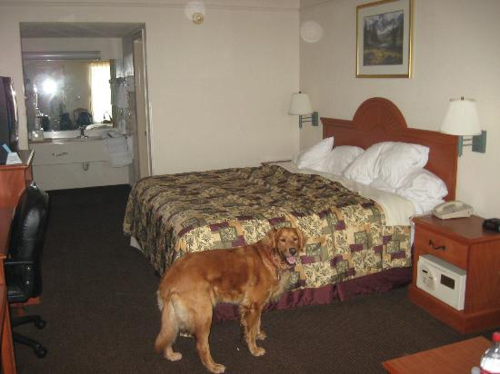 Best Western Of Murphy : Brandy was impressed