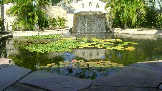 Esperanza - An Auberge Resort: koi pond waterfall