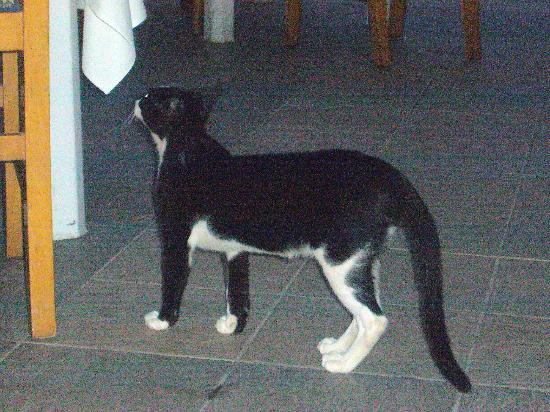 El Mouradi Djerba Menzel: c'est vrai il y a des chats