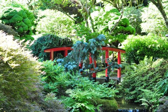 Great Tree Settings Picture Of Butchart Gardens Central Saanich Tripadvisor