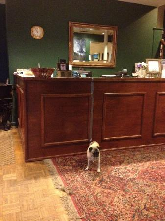 The Charles Inn: Pug in the lobby