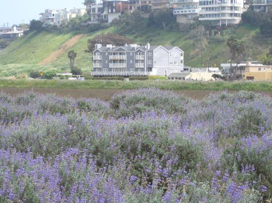 Inn at Playa del Rey - view from the Wetalnds over lupin in bloom