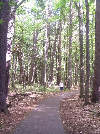 Hartwick Pines State Park: The Old Growth Pine trail