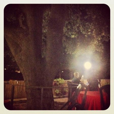 Ristorante Apparo: l'albero del cortile, magico , in ogni stsgione