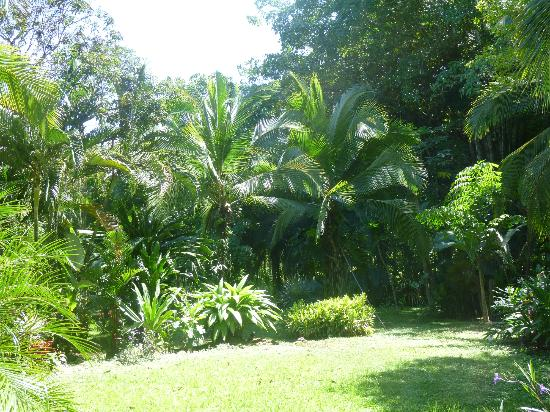 The Toucan Stay Inn: Le jardin