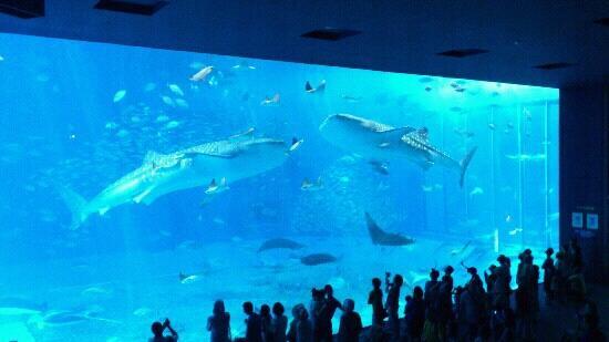 美ら海からの対岸島の風景 - Picture of Okinawa Churaumi Aquarium, Motobu-cho - TripAdvisor