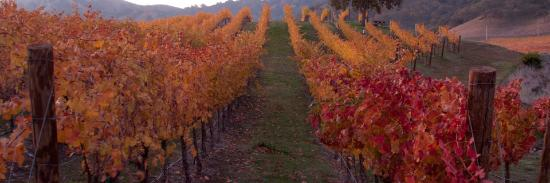 Clos LaChance Winery Photo