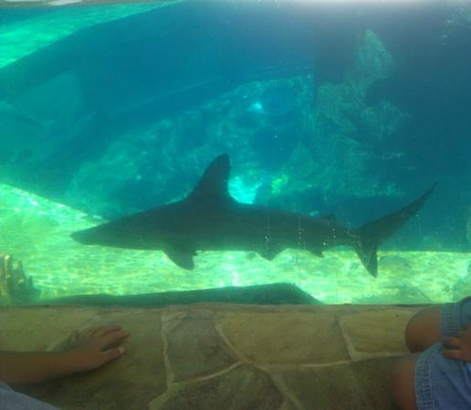 Sea Life Park Hawaii: Shark Tank