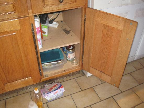 Mouse dirt in kitchen cupboards