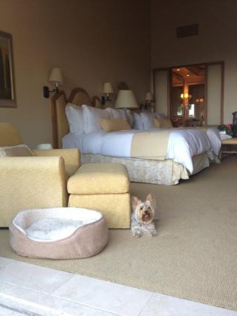 our room which was dog friendly picture of the resort at pelican rh tripadvisor com