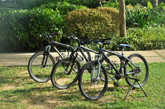 أموريتا ريزورت: bicycles for rent