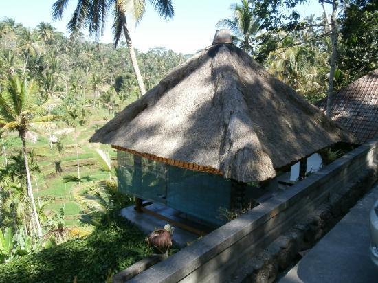 Boni Bali Restaurant : Rice field views from open-air restaurant