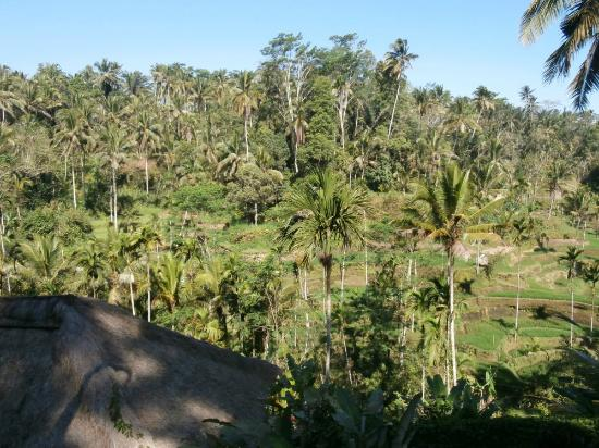Boni Bali Restaurant: View from the carpark