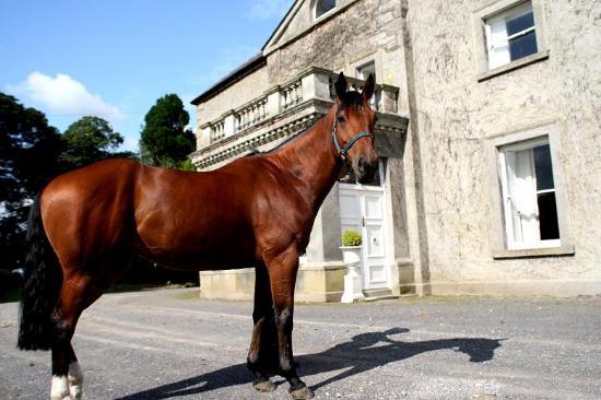 Bachelors Lodge Equestrian Centre Photo