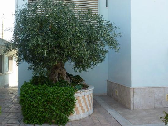Hotel Borgo del Mare: Un bonito olivo en el jardin