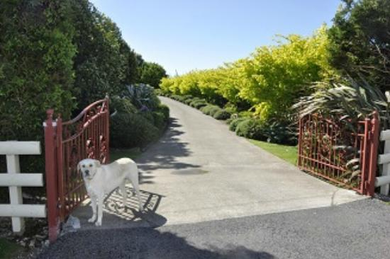 Villa Heights Bed and Breakfast: Daisy at gate