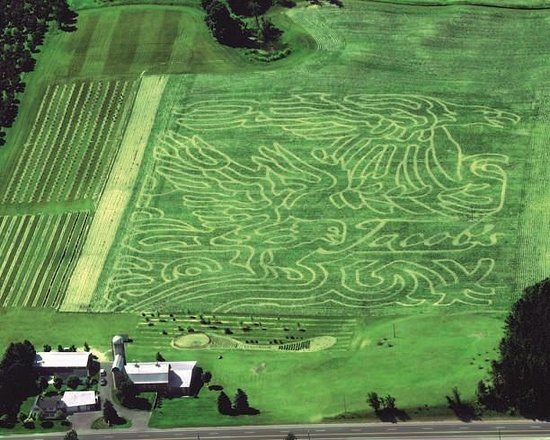 Jacob's Corn Maze Photo