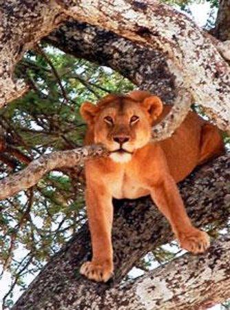 Hartebeest Safaris