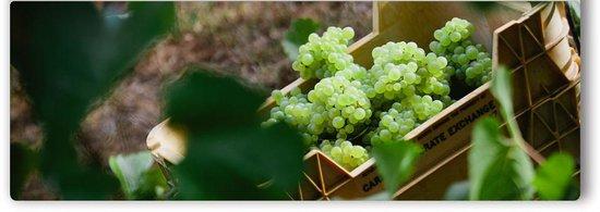 Singlefile Wines
