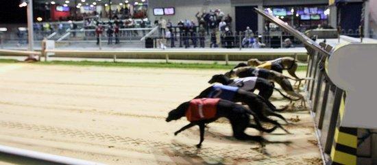 Mullingar Greyhound Stadium