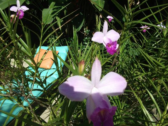 Villa Laurinda: le jardin