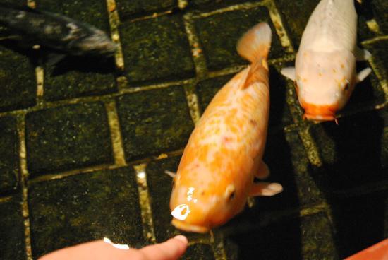 Grand Aquarium de Touraine: Aquarium